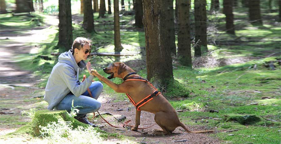 Ein High Five auf gute Mensch-Hund-Beziehungen