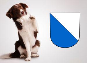 Checkliste Anschaffung Hund in Zürich - auf Englisch