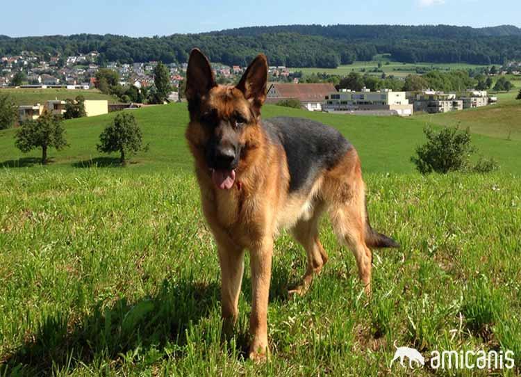 Ari - Kunde Hundeschule amicanis
