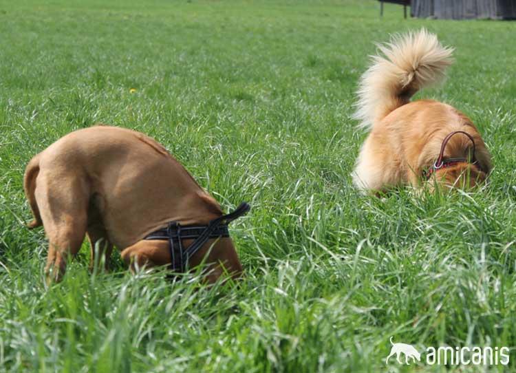 schnüffeln macht glückliche Hunde