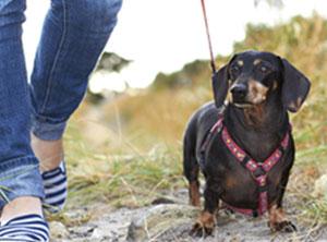 Social Walks - Social Dogs