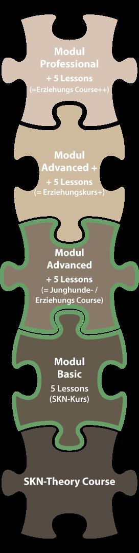 Junghunde-und-Erziehungskurs-Modul-Advanced-buchen