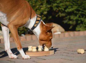 Hund lernt sich das Futter zu erarbeiten