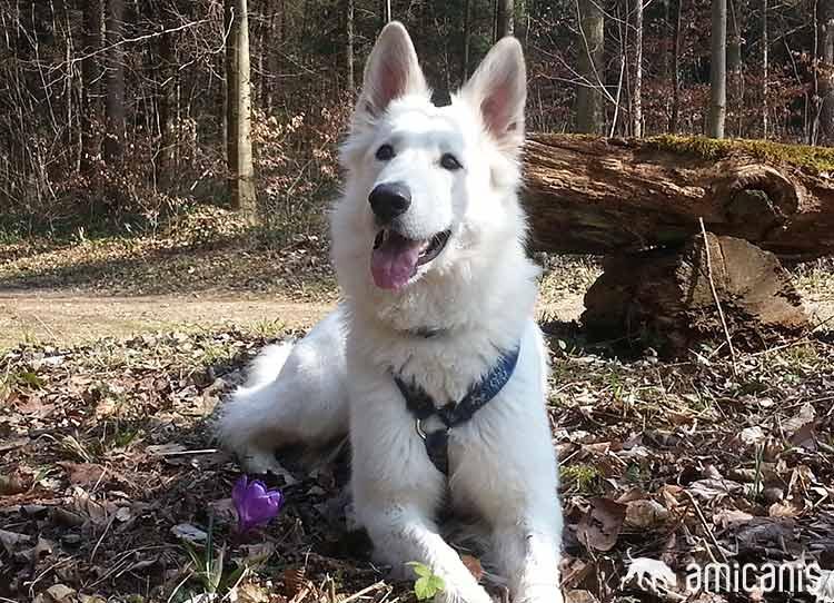 Madura - Kundin Hundeschule amicanis