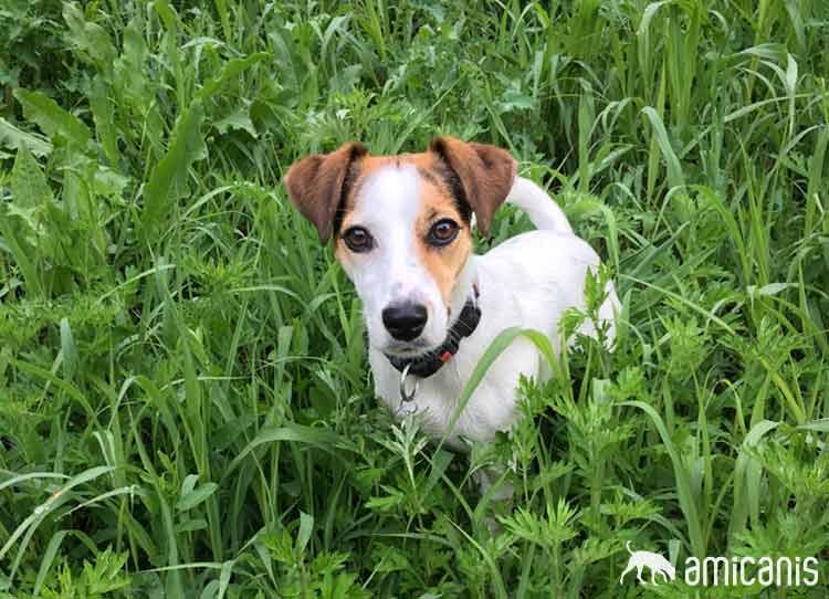 Maya, Kundin der Hundeschule amicanis