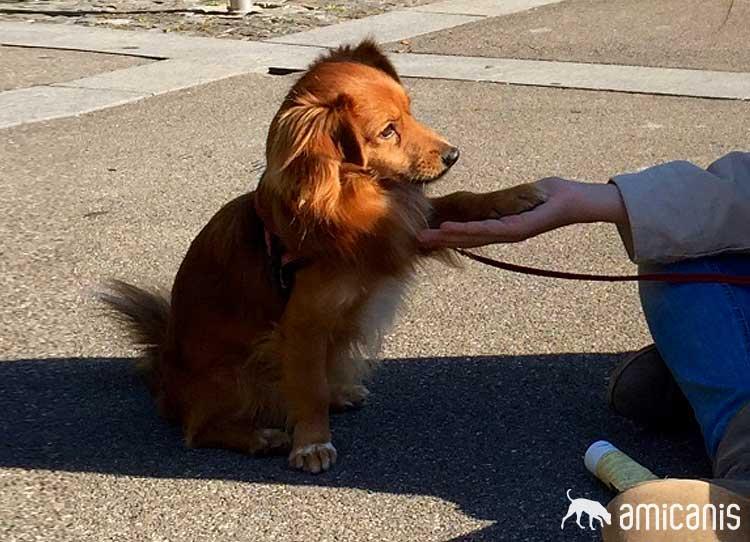 Niko - Kunde Hundeschule amicanis