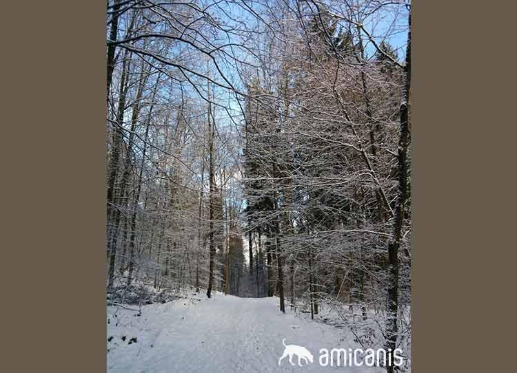 Käferberg im Winter