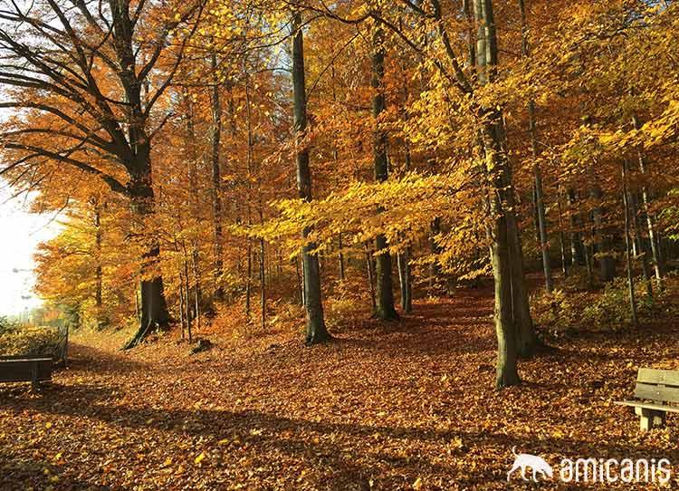 goldener Herbst auf dem Käferberg
