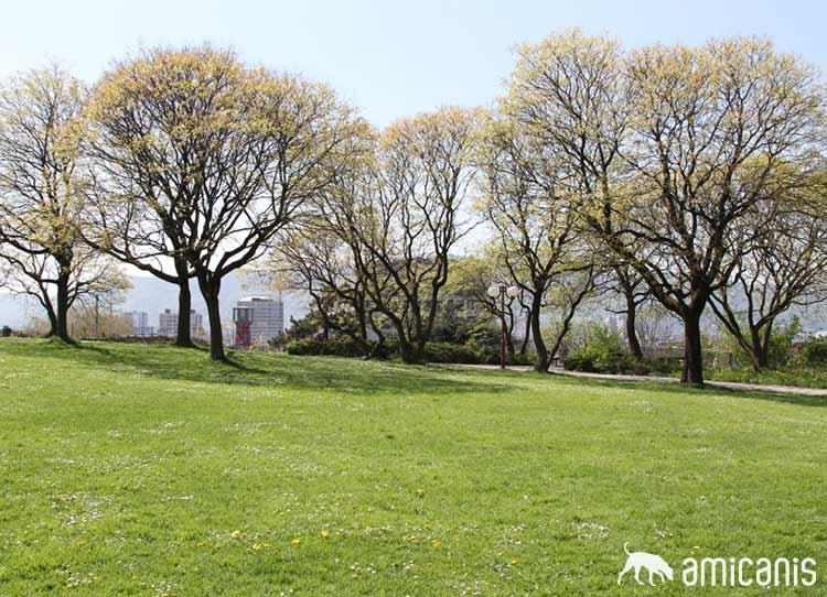 Park im Frühing