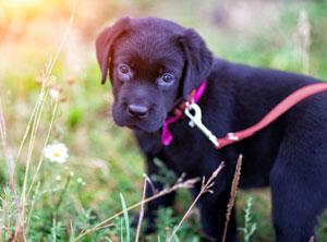 Was ein Hund im Welpenalter lernt, lernt er für immer!