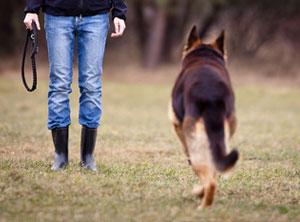 Im SKN Kurs in der Hundeschule amicanis wird z.B. der Rückruf trainiert