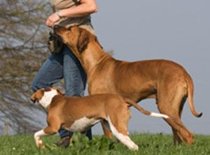 obligatorische Hundekurse Kanton Zürich