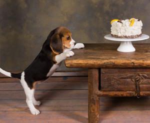 Hundeschule-Zuerich-Kurs-Abbruchsignal