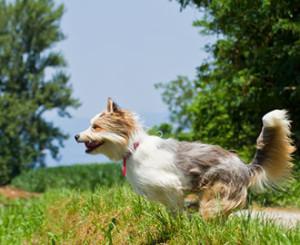 Hundeschule-amicanis-Zuerich-Rueckruftraining-intensiv