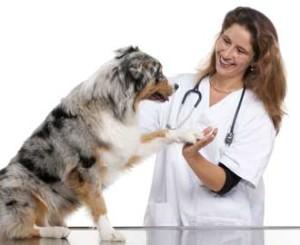 Medical-Training-Tierarzt-Training Hundeschule amicanis Zürich