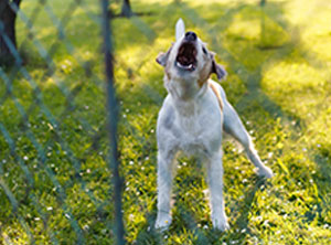 Verhaltenstherapie-Hund-Zuerich-bellen