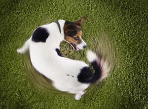 Verhaltenstherapie-Hund-Zuerich-stereotypie