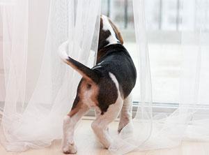 Verhaltenstherapie-Hund-Zuerich-trennungsangst