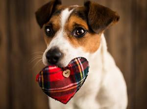 Verhaltenstherapie-Hund-brav