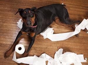 Verhaltenstherapie-Zuerich-Hund-langeweile