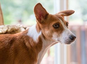 Verhaltenstherapie-Zuerich-Hund-nothappy