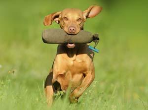 geistige-koerperliche-auslastung-hund