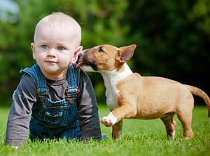 kind-und-hund-verhaltensregeln
