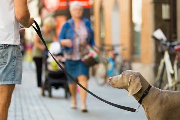 Verhaltenskodex Stadt Zuerich Hundeschule