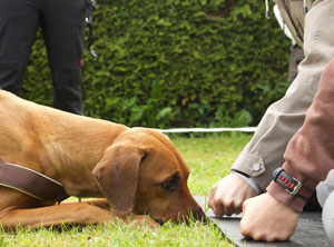 Nasenarbeit-Hundeschule-Zuerich-Objektsuche