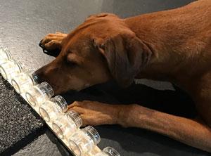 Nasenarbeit-Objektsuche-Hundeschule-Zuerich