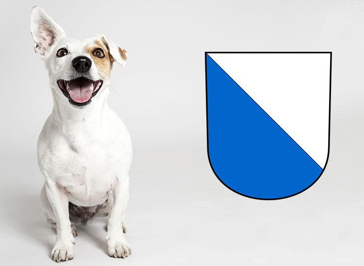 Checkliste Anschaffung Hund Kanton Zürich