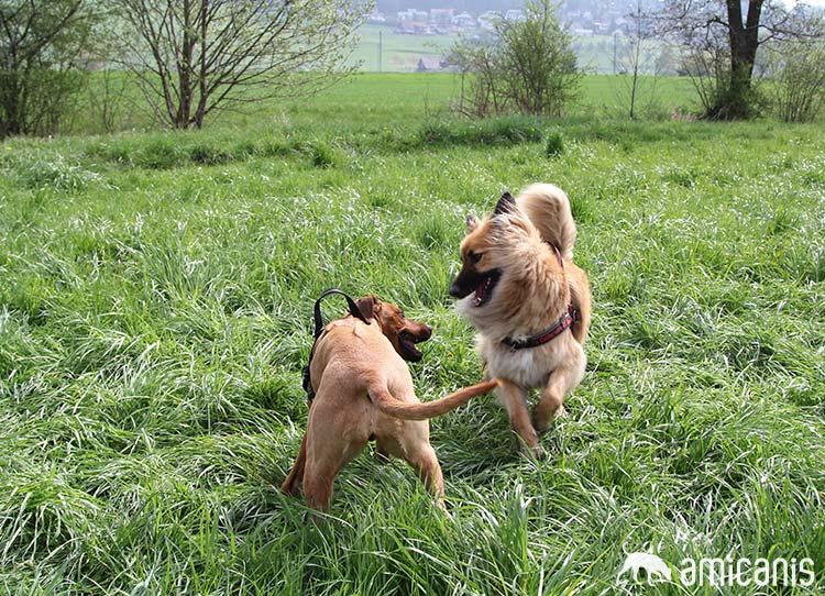 Hundeschule-zuerich-hundespiel-9