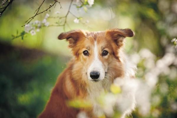 neue Kurse Hundeschule amicanis