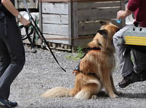 mantrailing-hundeschule-amicanis-tin-sitzt-anzeige