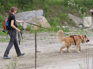 mantrailing-hundeschule-amicanis-zuerich