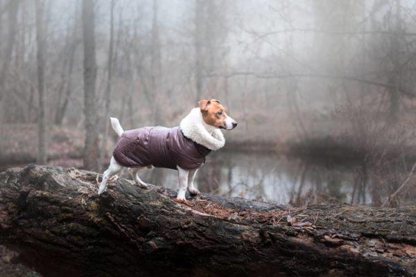 Hund trägt warmen Mantel